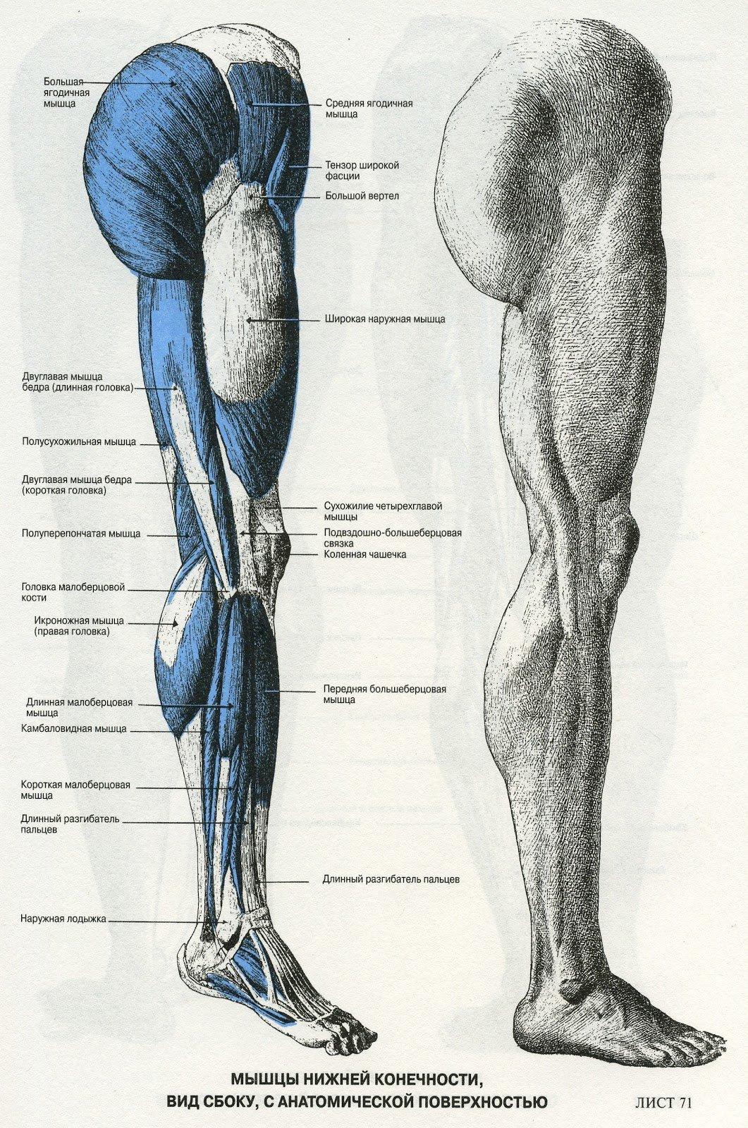 березні части ноги человека фото с описанием наличием
