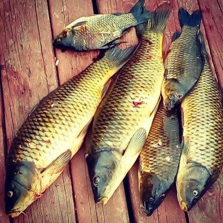 активатор клева рыбная ловля