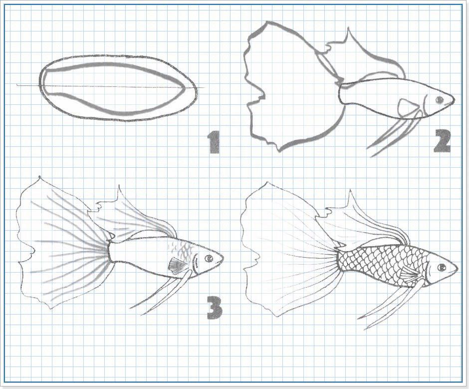 Рисуем карандашом поэтапно рыбку картинки