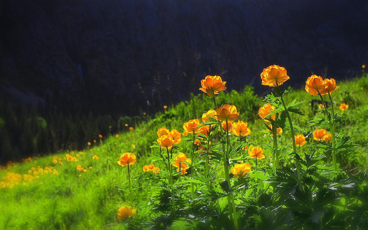 Фото огоньков цветов на рабочий стол