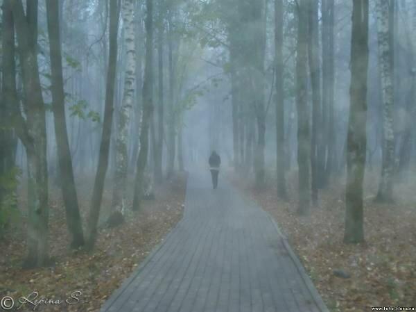 Сквозь туман осени