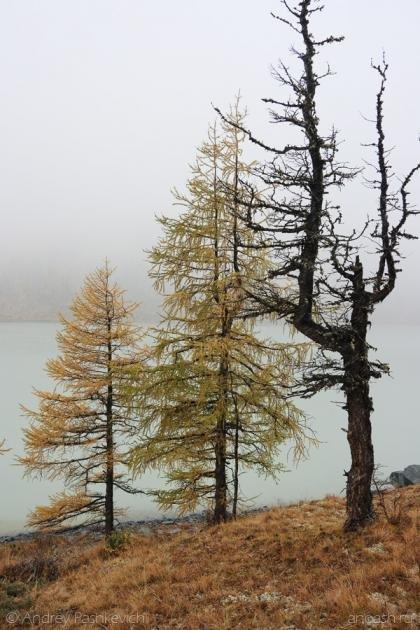 Деревья по берегам Аккема