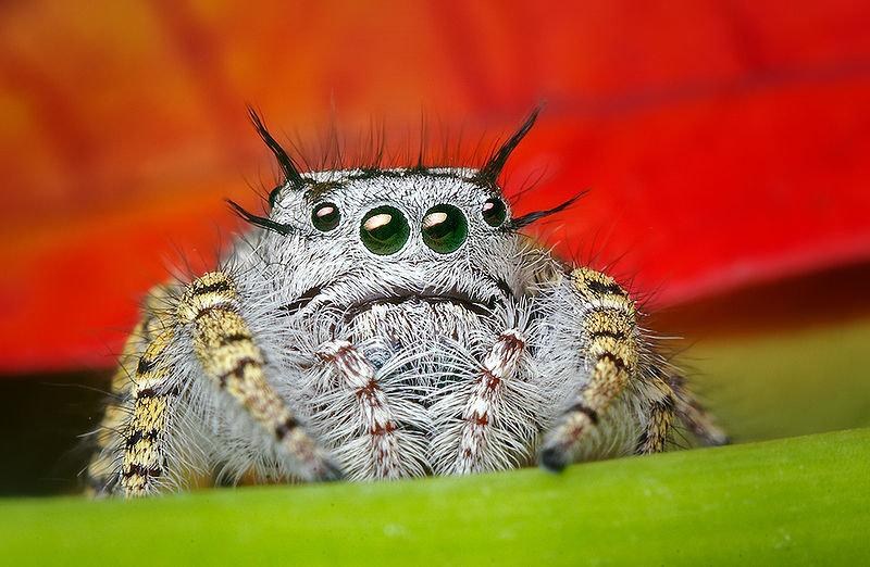 Вечера анимация, смешная картинка у тебя паук