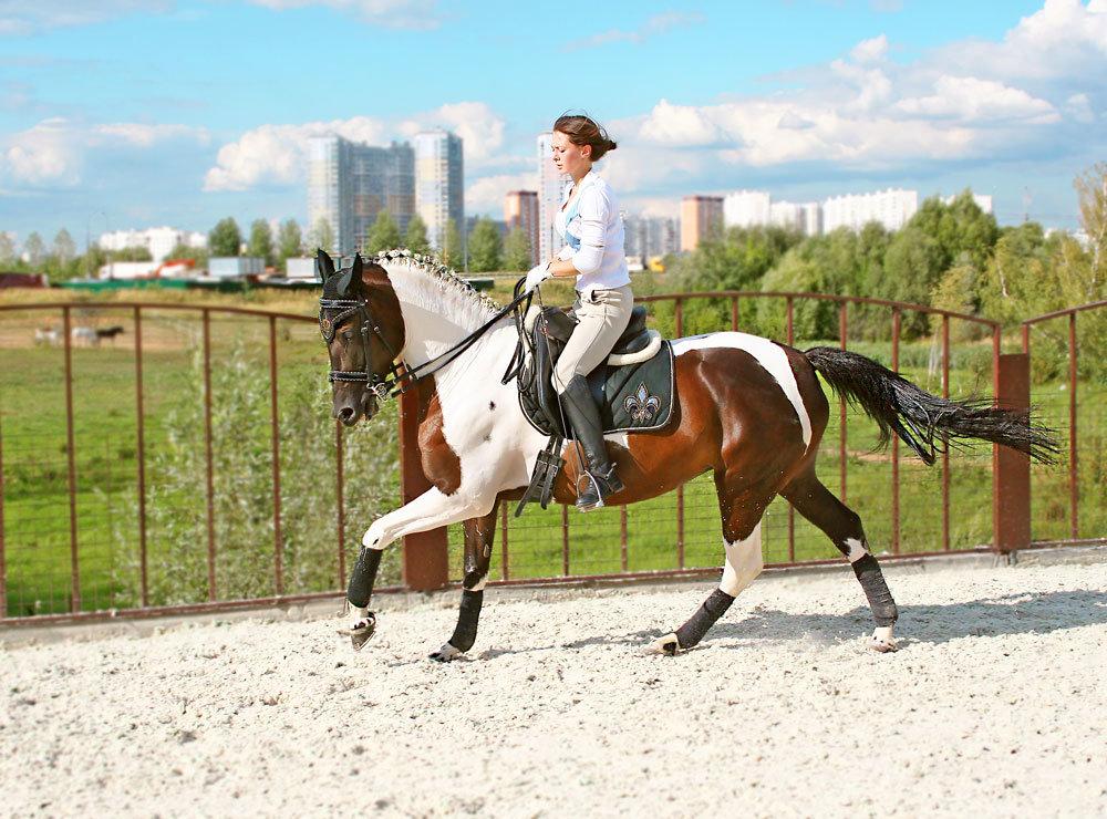 преимущественно картинки с лошадьми и всадниками имитации