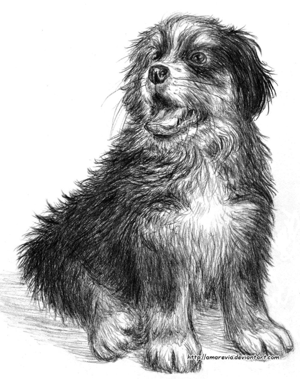 картинки карандашных собак