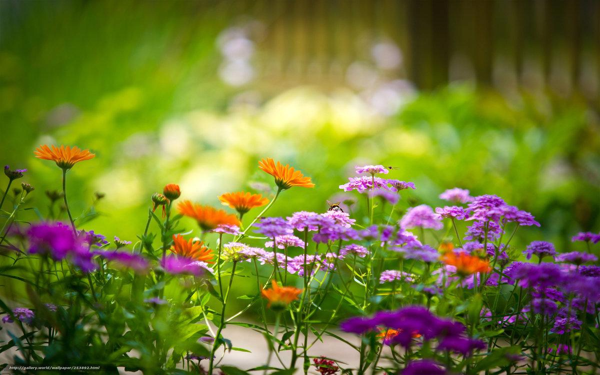 Красивые цветы приносящие летнее настроение