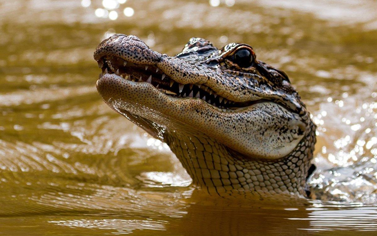 Открытка летом, картинки смешных крокодилов