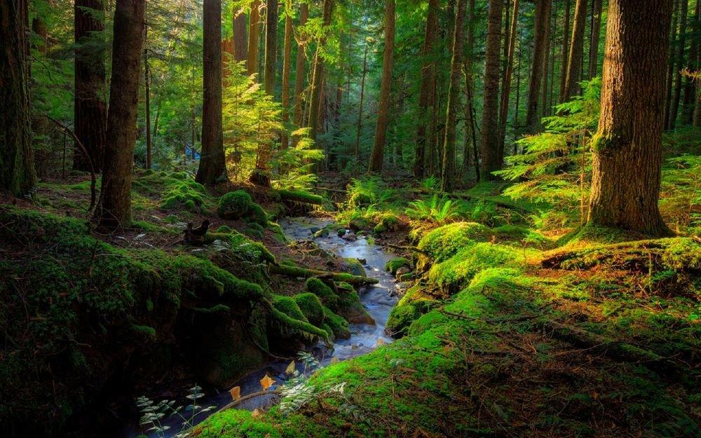 получила фото ручей в лесу оригинальная