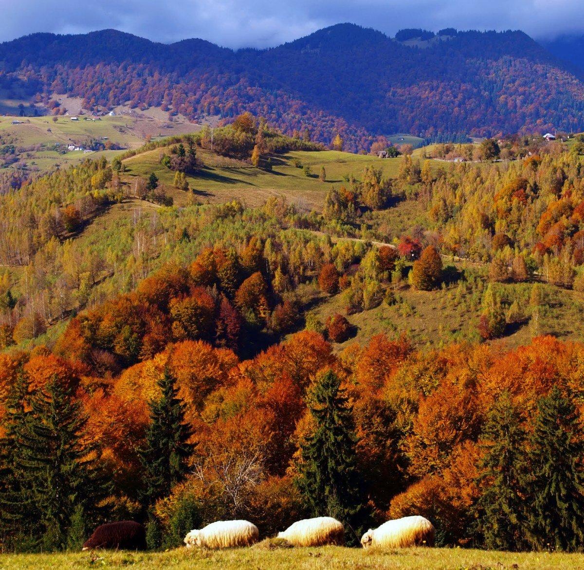 природа румынии фото самом