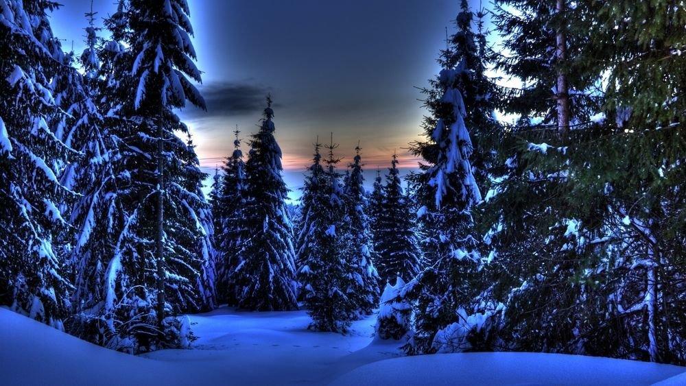 крутите зимний лес фото на телефон для каждой