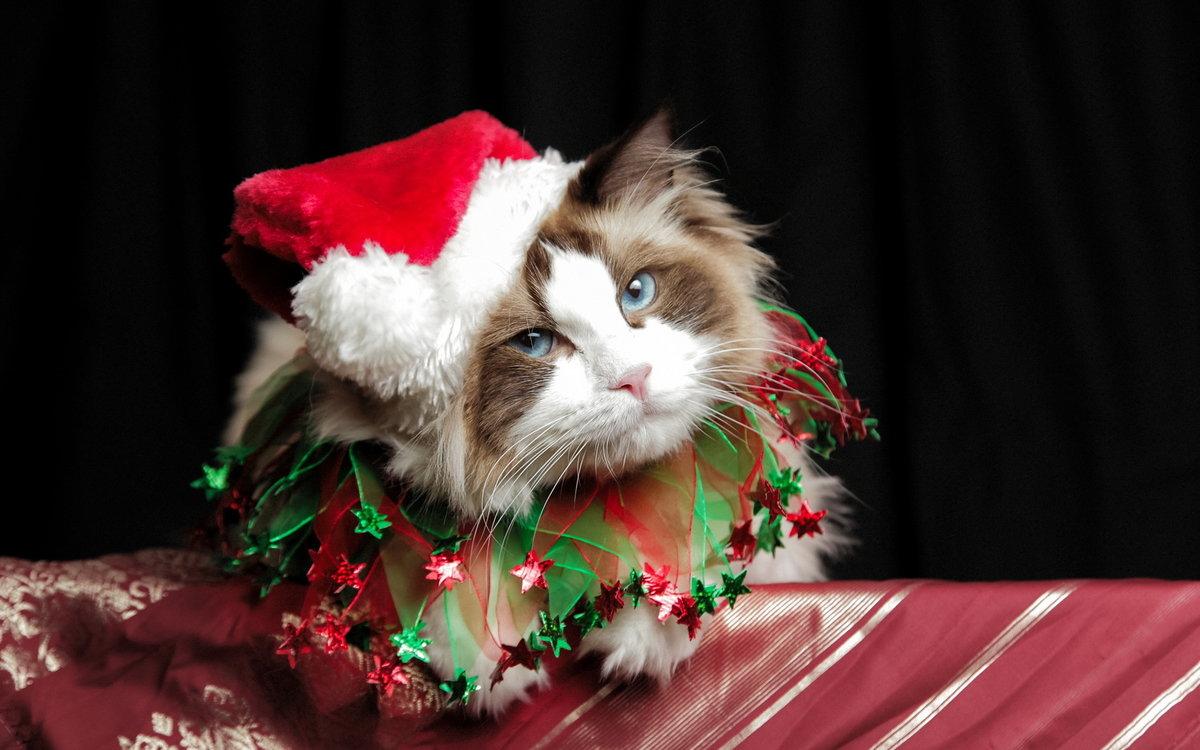 Стихи, смешные картинки с котами новый год