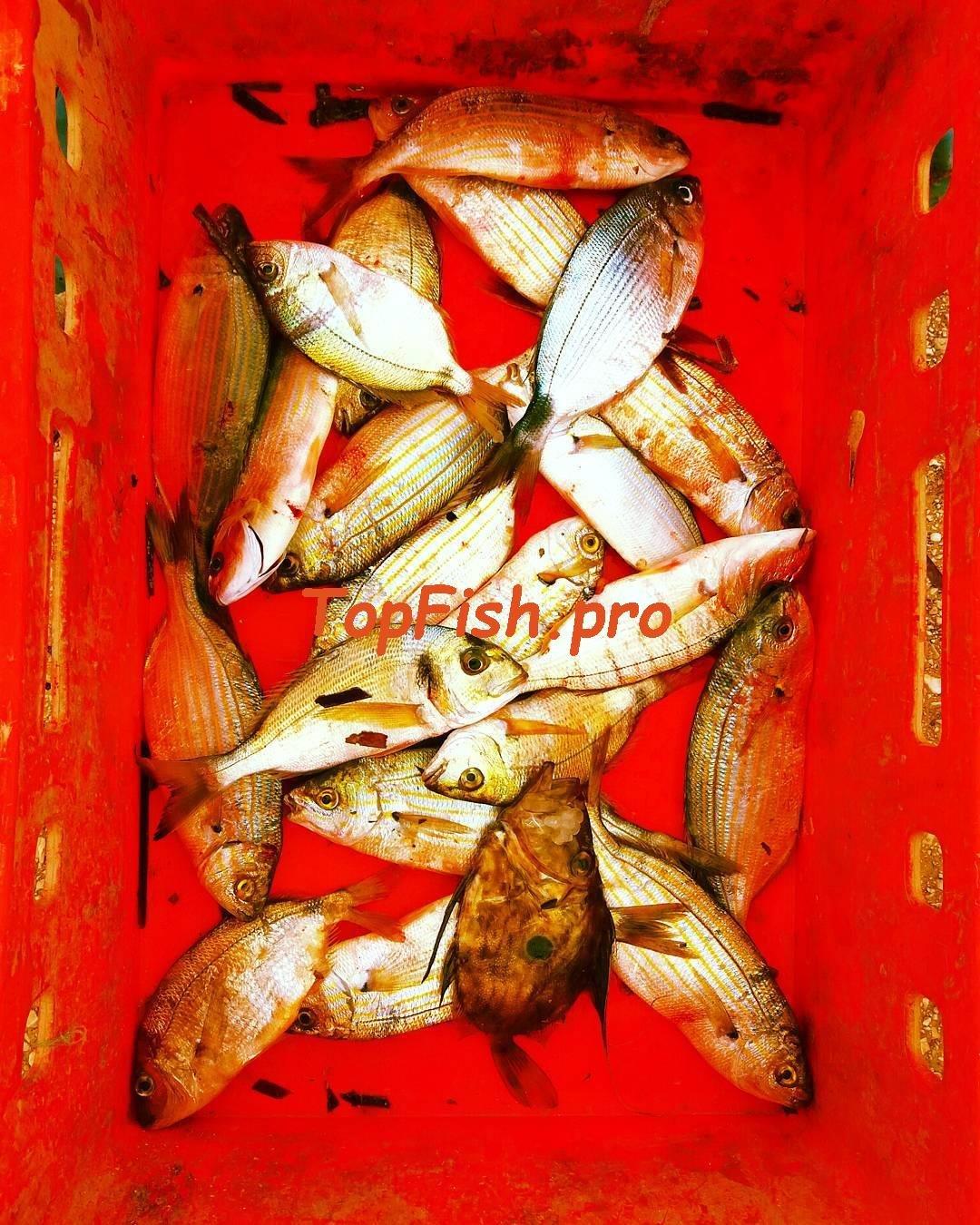 прикормки зимней рыбалки окуня