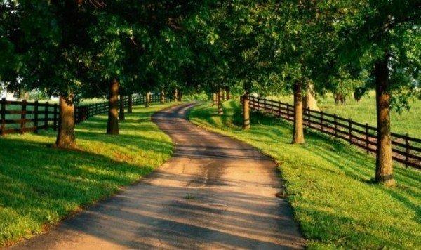 О материальности мысли, или дорогу осилит идущий... - Блог В