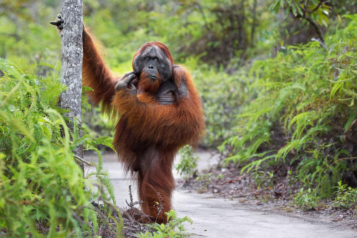 Орангутанги картинки смешные, крещением