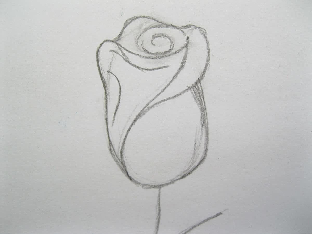 Роза рисунок карандашом поэтапно для начинающих, открытки для мужчин