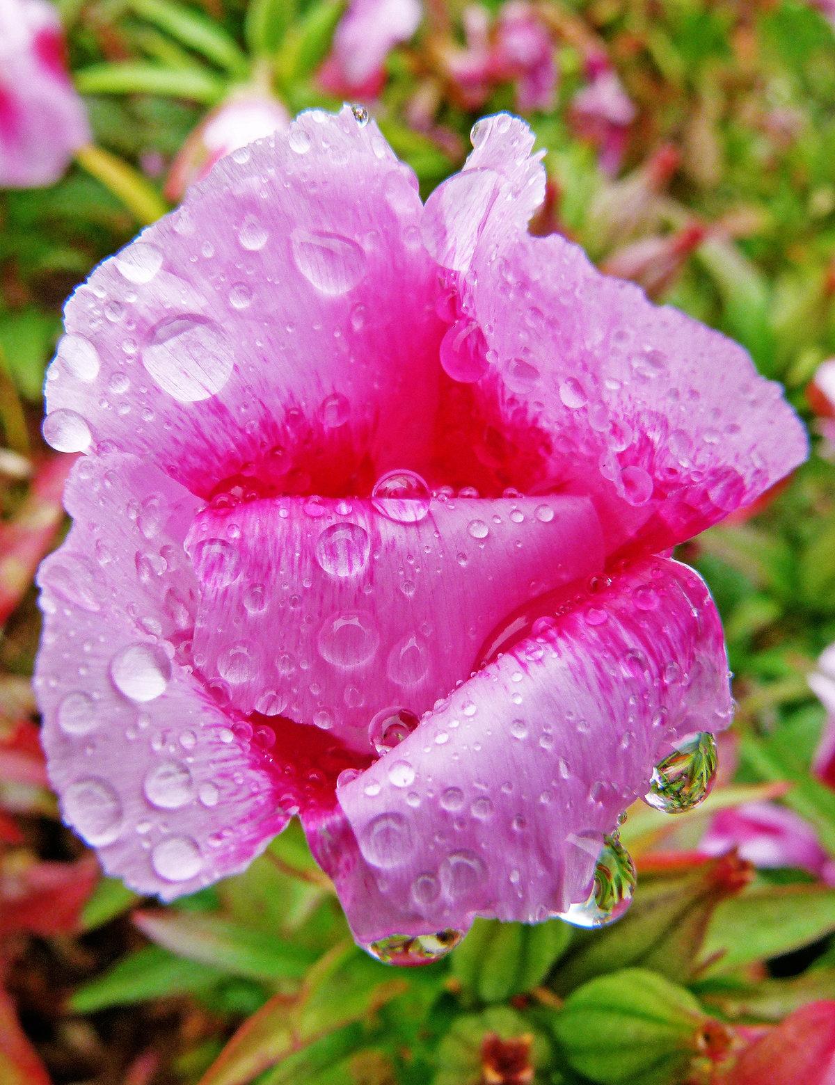 Картинки цветы после дождя