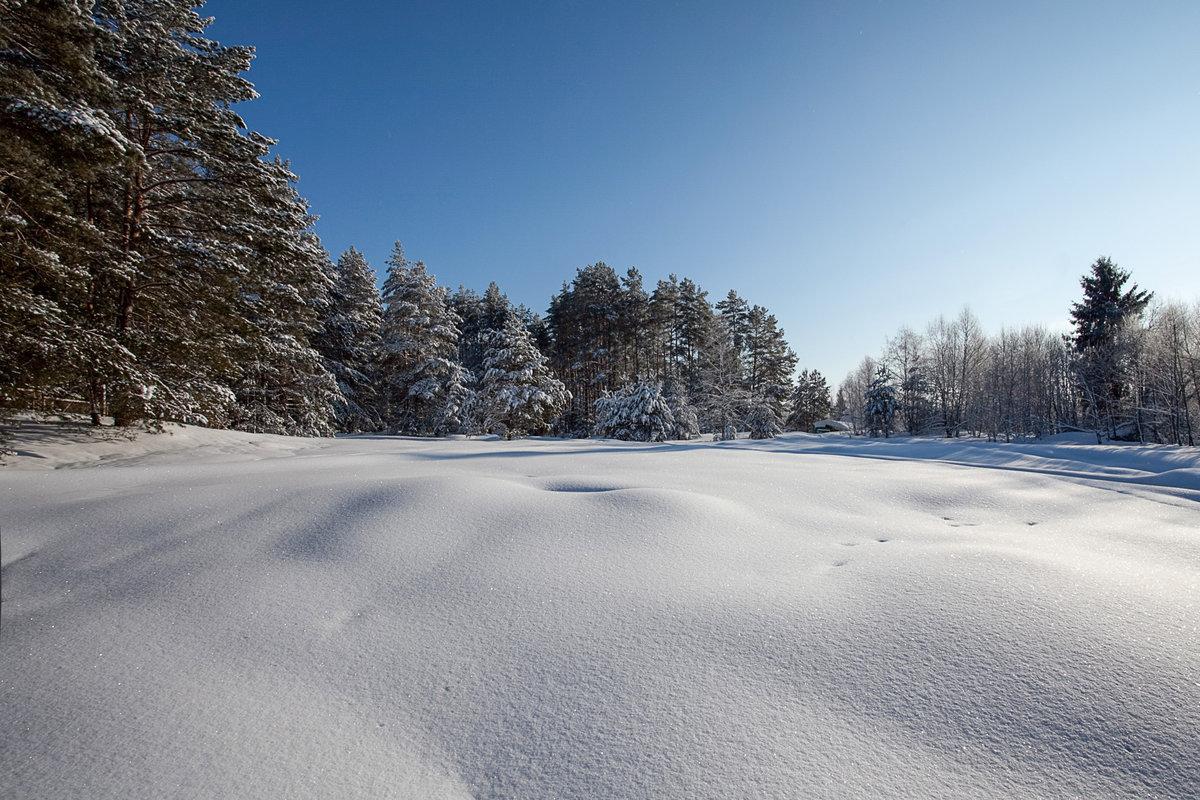 картинка зимней лесной поляны петербурге нынешнее