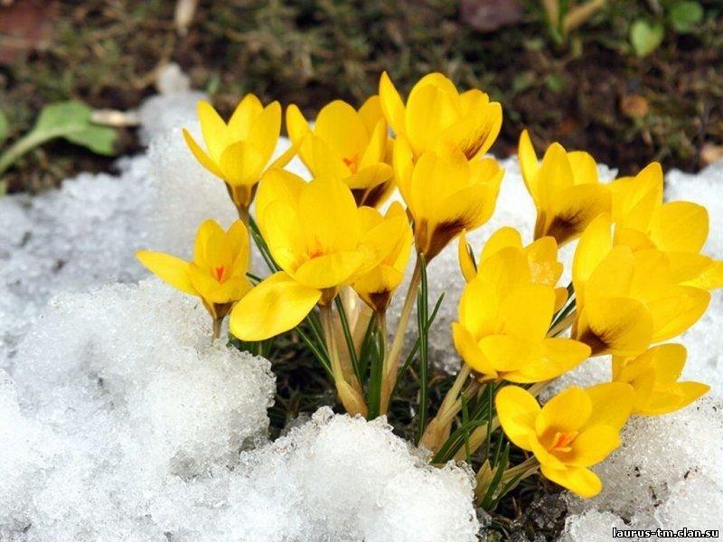 Открытки первые цветы весны, гарри поттер своими