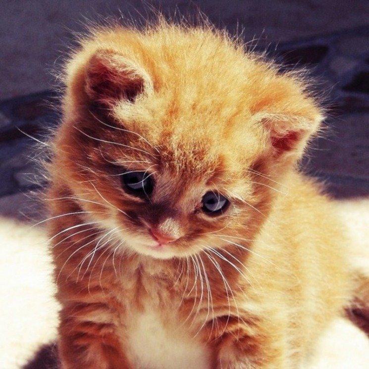 Пейзажи картинки, картинки котят очень смешные