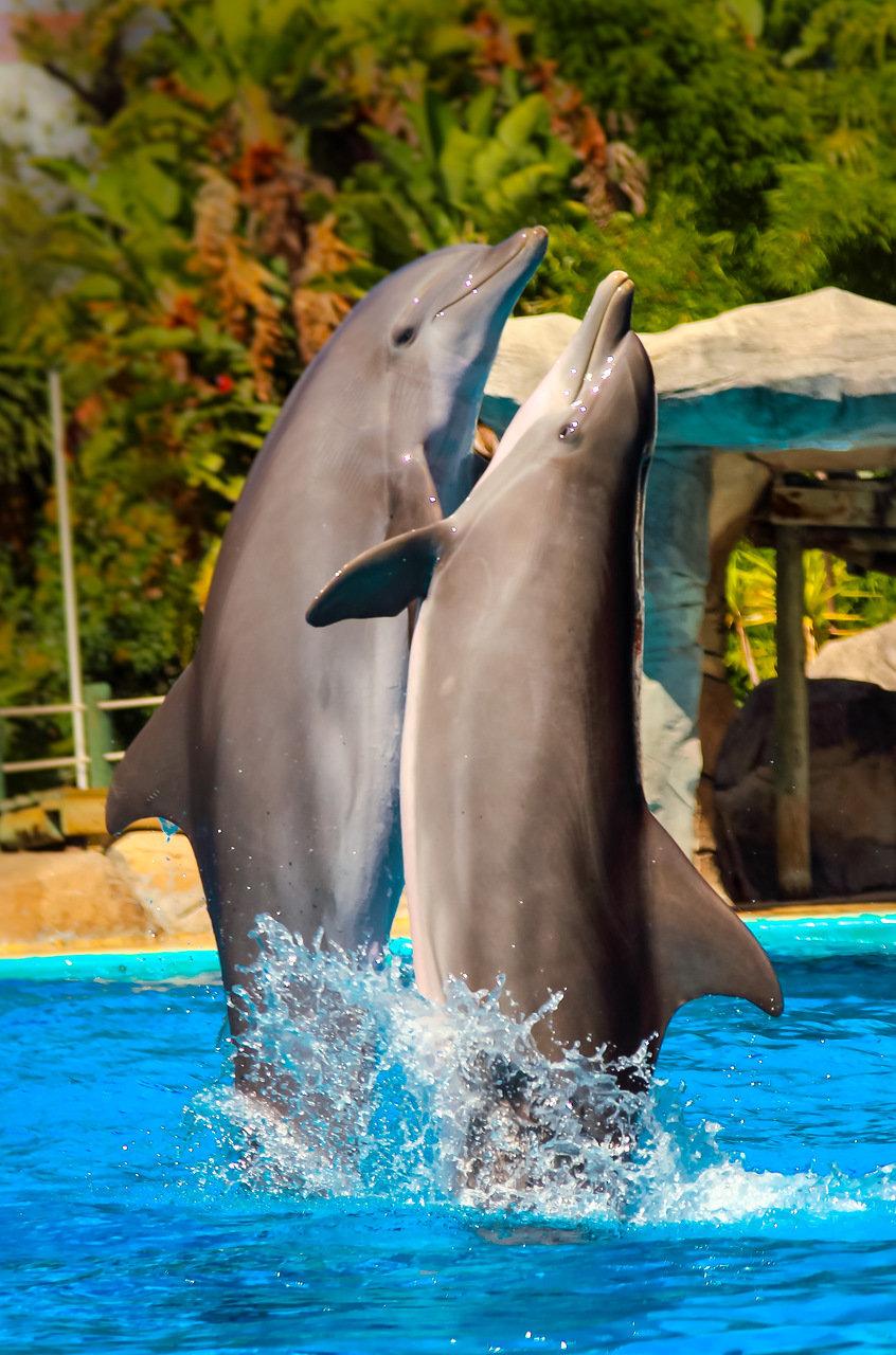 красивое фото дельфиненка обещала