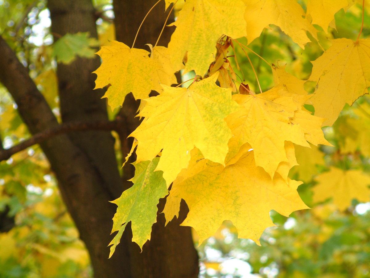 картинки листья желтые собаки