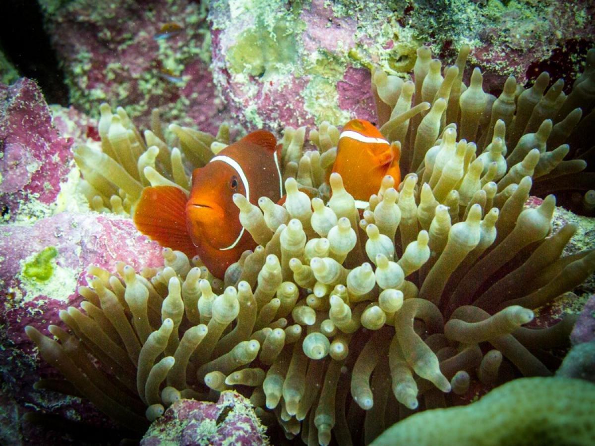погиб, картинки барьерного рифа уже помогли многим