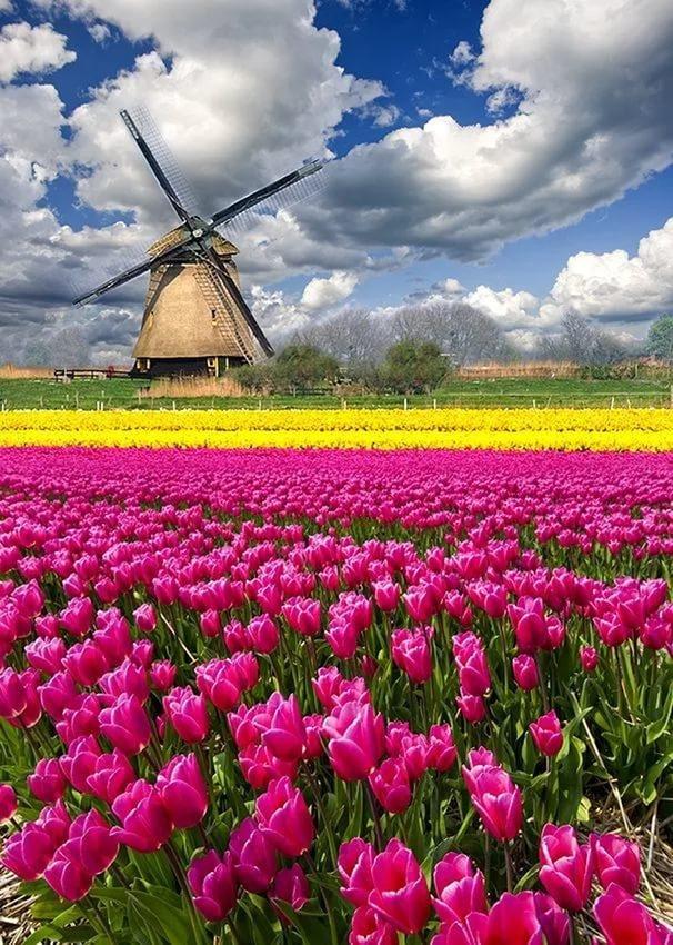 страницах самые красивые фото весны в мире обои для рабочего