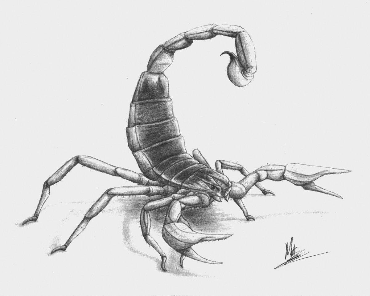 Легкие рисунки скорпиона