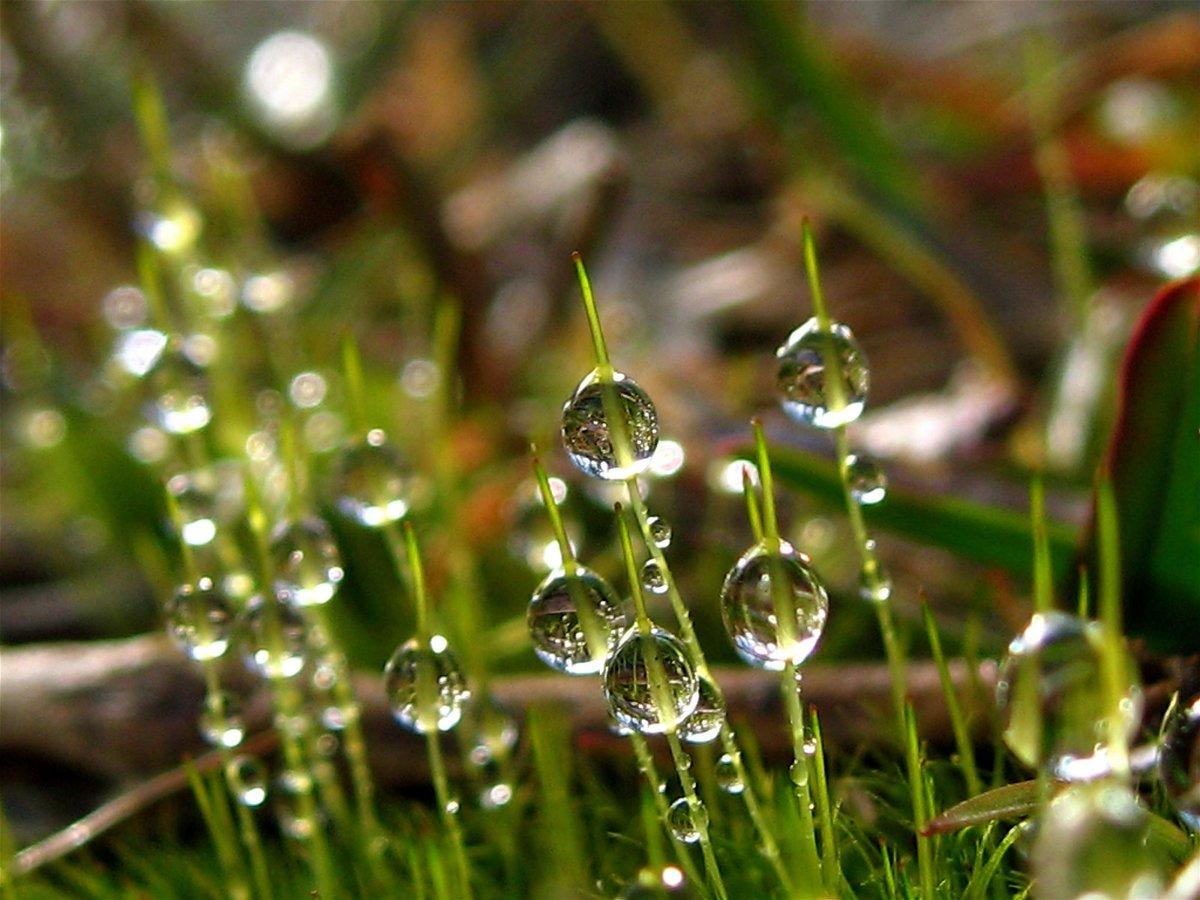 картинки трава с росинкой отличный тренд