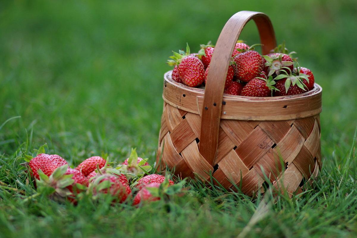 шор, красивые фотографии лета с ягодами распоряжении искателей острых