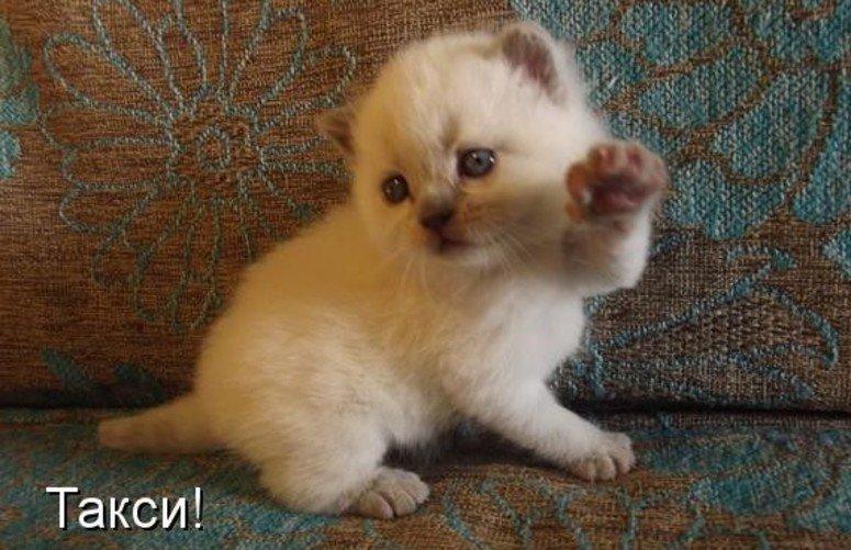 Картинки про кошек и котят смешные с надписями