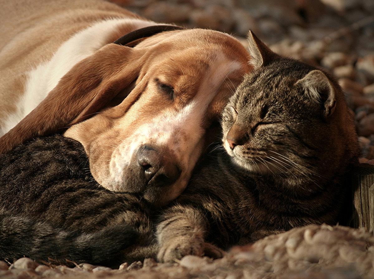 Прикольные фото и картинки кошек и собак, смешные картинки слез