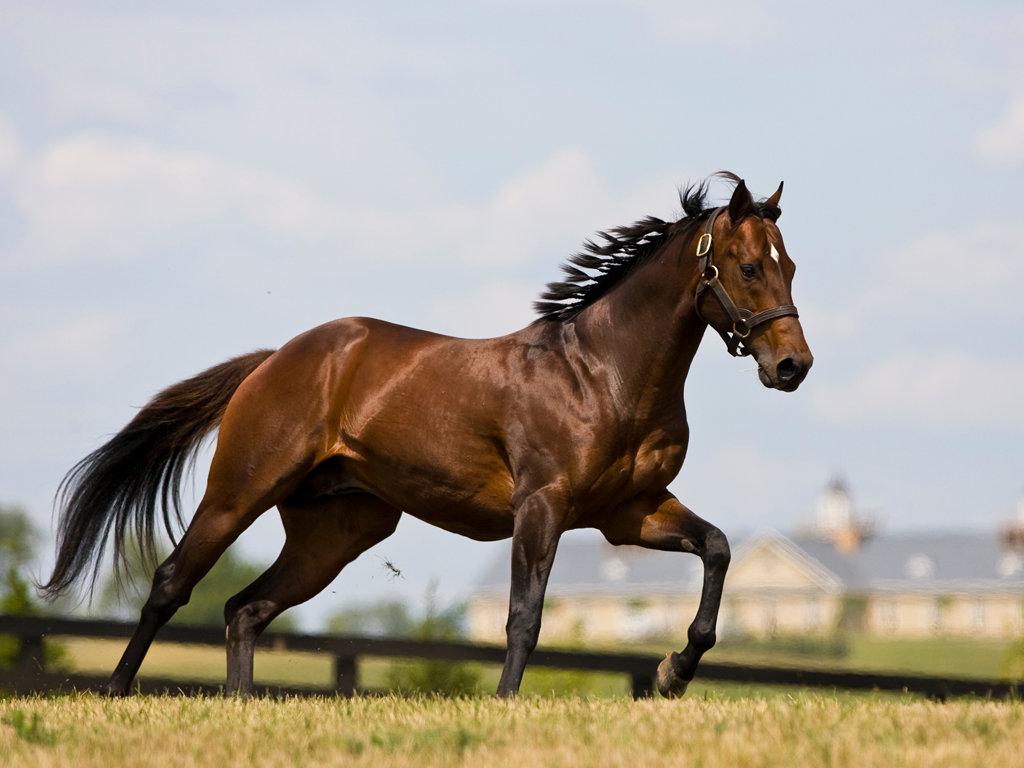 картинки самая быстрая лошадь в мире