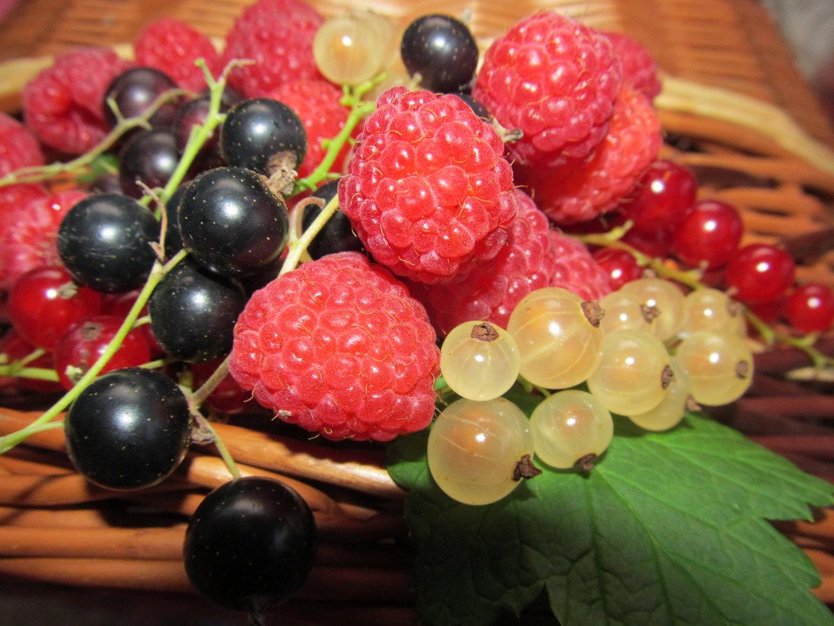 Картинка садовых ягод