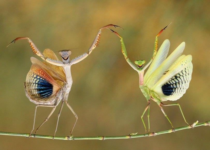 Приколы картинки с насекомыми