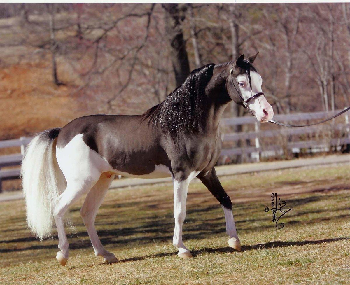 этот картинки с мастями лошадей богини