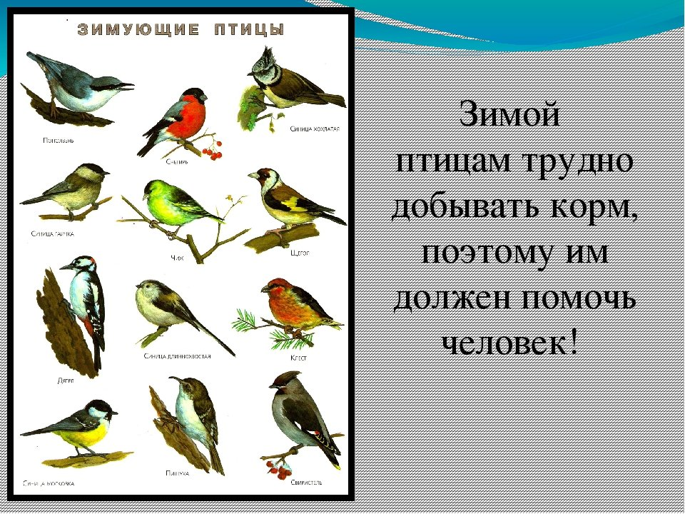 конце картинки птиц зимой с названиями подарок