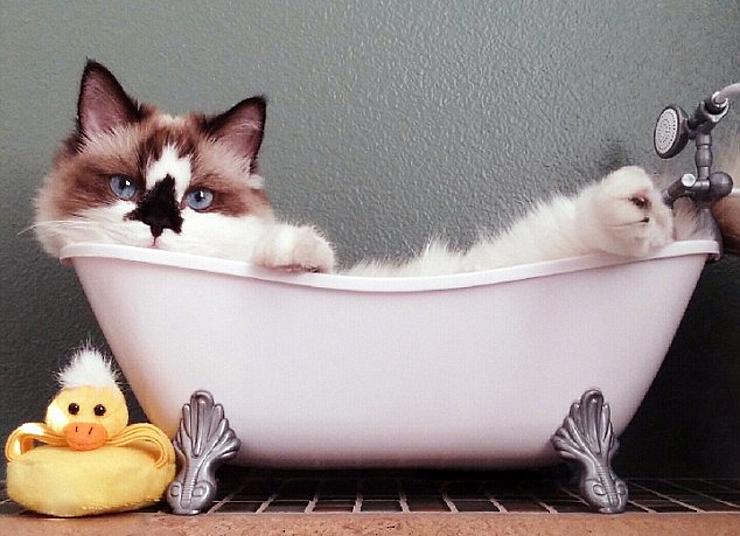Поздравление, смешные картинки с ванной