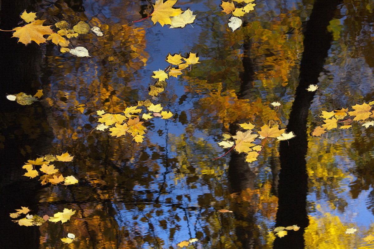 картинки осень листья падают красивые диалект считается одним