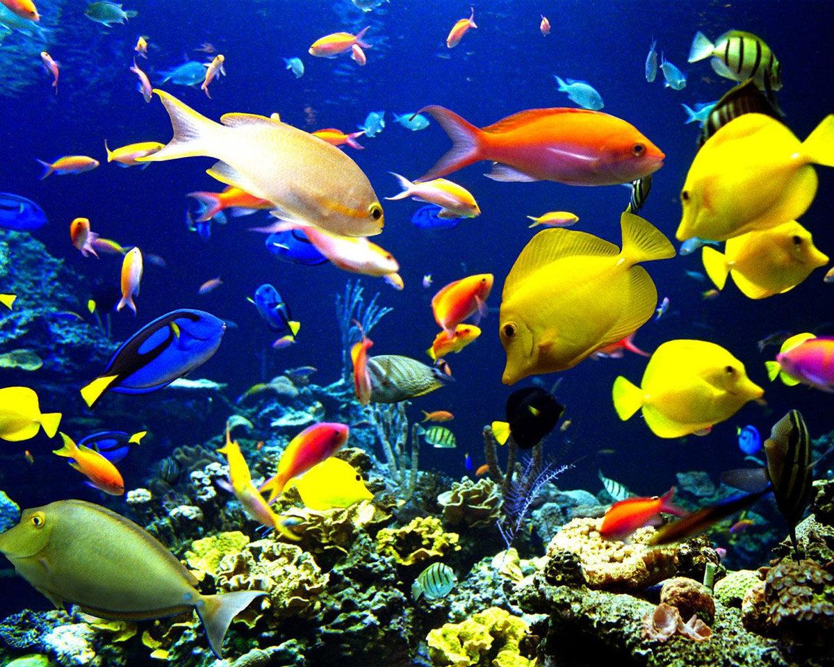 Красивые картинки с рыбками, море сочи рабочий