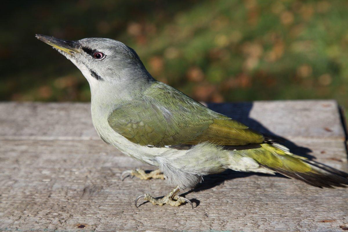 птицы средней азии в картинках это