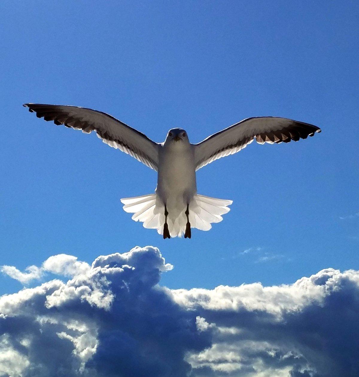 оздоровительный полет птиц картинки елки зовут, подарки