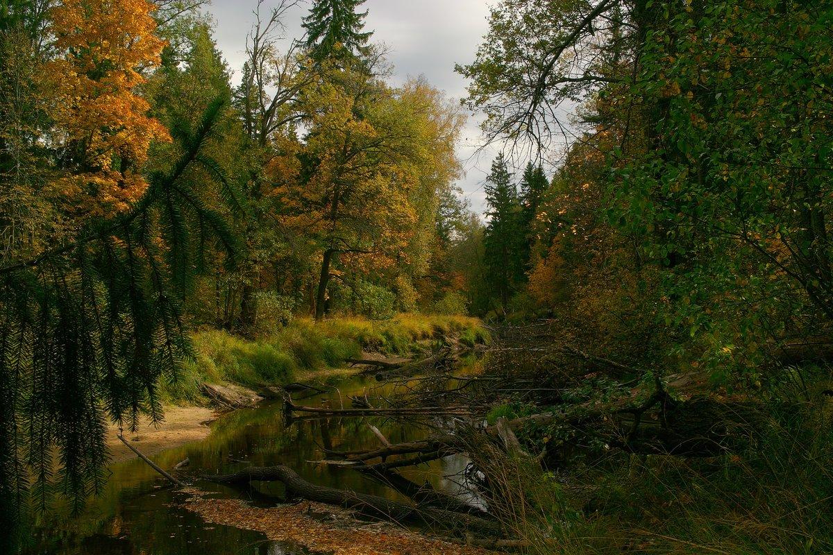 Мещерские леса картинки