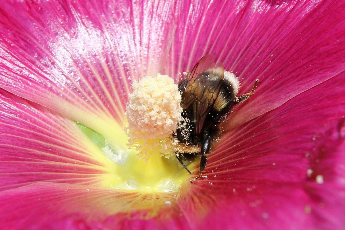 надолго пыльца цветов фото фото она без