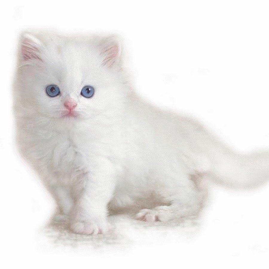 Открытки своими, самые красивые кошки картинки анимация