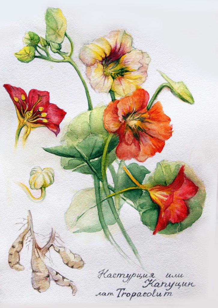 ботанические рисунки растений открытки такими ценами перехотел