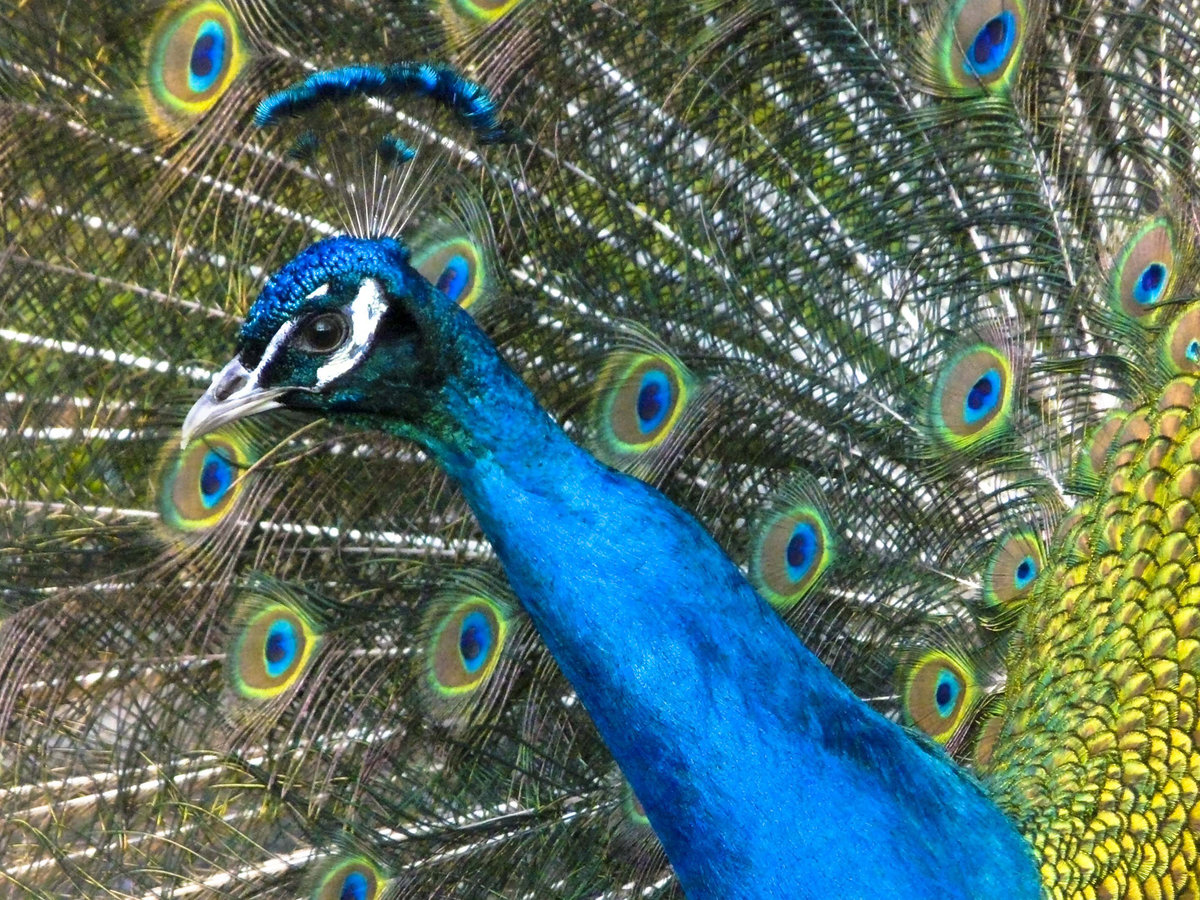 Птица застрявшая в шлеме фото зерно алевролита