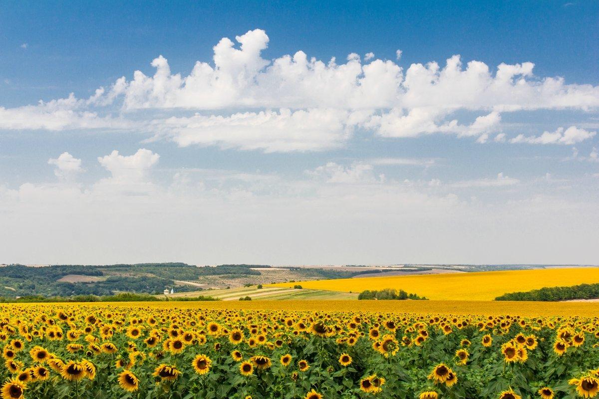 понадобится картинка природа украины летом отзывы фото обзор
