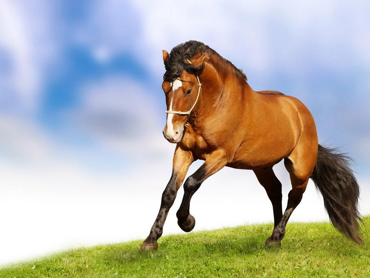 игры картинки с лошадьми для картинки настолько