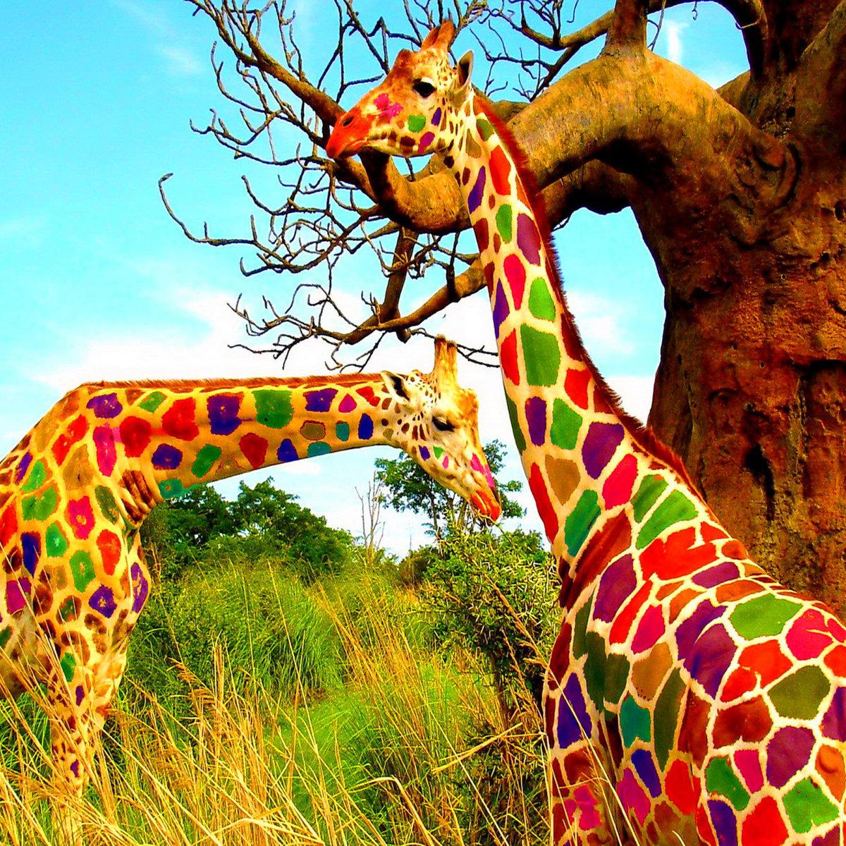 большой все картинки про жирафа выхода тюрьмы вор